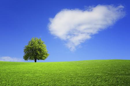 Eenzame boom op het veld
