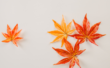 The creative view of maple leaf