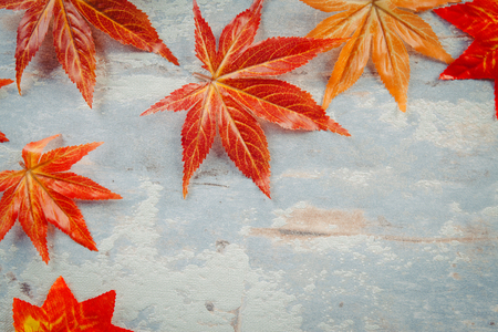 The maple leaves overhead