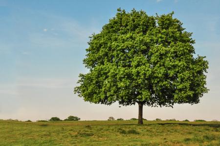 Environmental protection of big trees