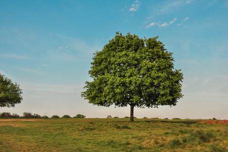 big trees with grassland