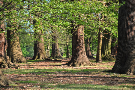 Forest landscape view Reklamní fotografie