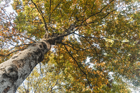 Low angle view of tree in autumn