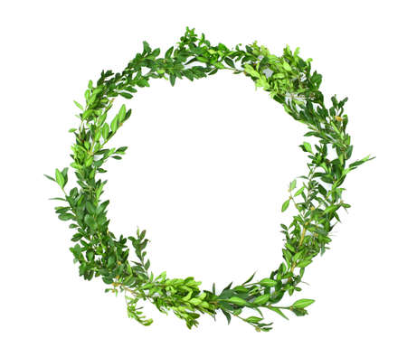 Boxwood wreath isolated on white background. Frame, copy space.