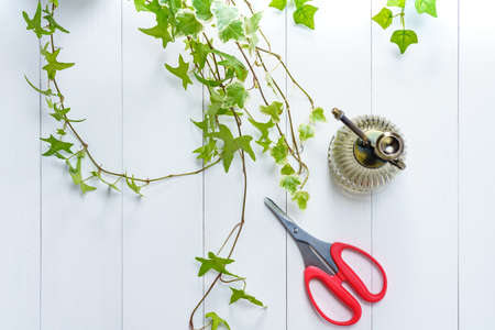 the Gardening 写真素材