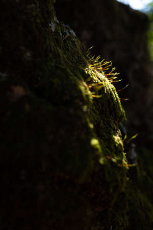 Light shining into the mossy forest
