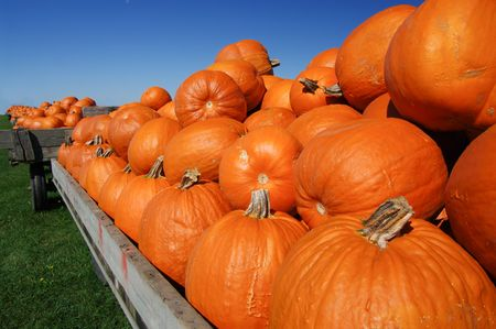 Pumpkin Carts: Pumpkins loaded on carts are ready for sale on a sunny fall day. photo