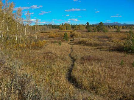 teton: Pista: Un sentiero stretto ma ben utilizzato conduce attraverso un piano erboso in Grand Teton National Park.  Archivio Fotografico
