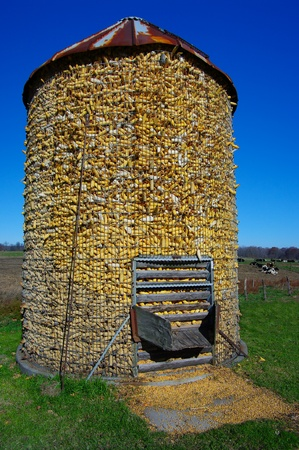 storage bin: Corn Crib: A corn storage bin is filled to the top after fall harvest on an Ohio farm. Stock Photo