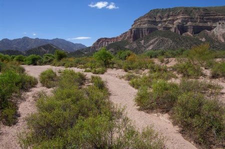 Arroyo:  Desert brush grows in a dry stream bed that provides a temporary drainage channel for flash floods in the La Rioja region of Argentina. photo