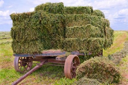 carreta madera: Carro del heno Un viejo carro de madera con ruedas de hierro pesados ??recoge las balas de heno fresco en una granja en el sur de Pennsylvania