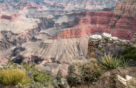 plantas del desierto: Canyon Rim View Point: Las plantas del desierto decorar el borde sur del Gran Cañón en el Pima Point.