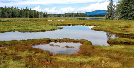 New England Marshland:  Grassy wetlands cover a portion of the shoreline on Mount Desert Island near Acadia National Park. Stock Photo