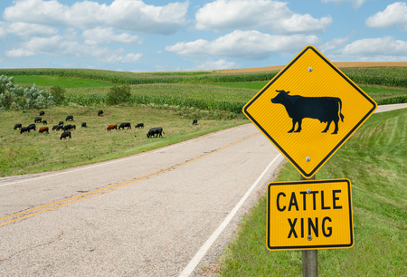Cattle Crossing Sign:  Motorists in southern Wisconsin are advised to watch for cattle on the road. Stock Photo
