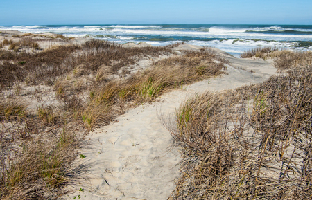 Outer Banks Beach Trail:  A sandy foot path leads across grass-covered dunes to the beach at Cape Hatteras National Seashore.