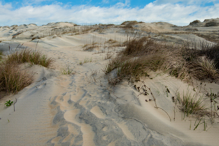 Sand Dunes Footpath:   Windblown sand fills the tracks of hikers on a path across the dunes at Cape Hatteras National Seashore.