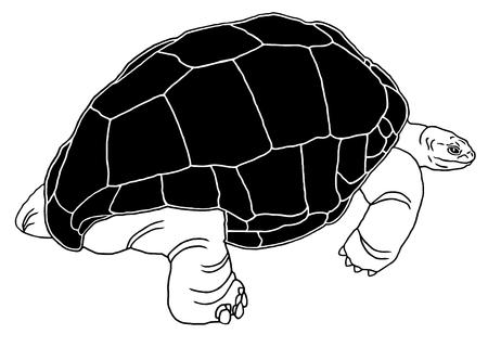 tortuga: Tortuga gigante de Aldabra es una de las tortugas más grandes en el mundo