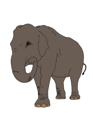 proboscis: The elephant on the isolated background Illustration