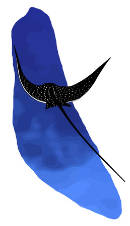 spotted ray: Spotted eagle ray near coral reef
