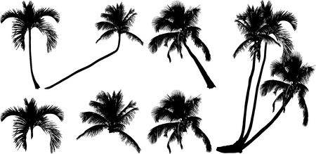 intricacy: silhouettes of tropical lonely palm trees on the isolated background