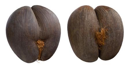 Seychelles seas coconuts (coco de mer) on isolated background Stock Photo
