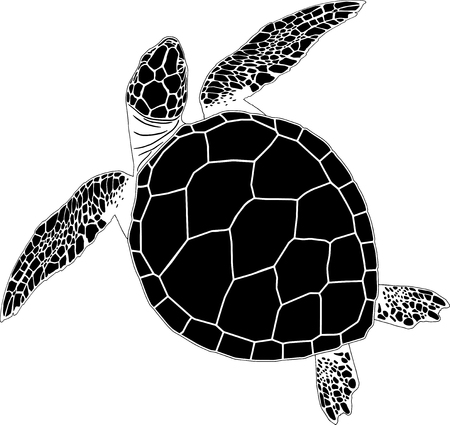 Sea turtle on the isolated background