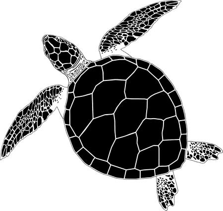 고립 된 배경에 바다 거북이 일러스트