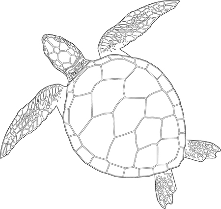 graphics design: Sea turtle on the isolated background