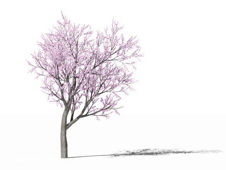Flowering peach tree Stock fotó