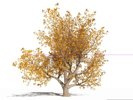Quercus robur tree (European oak, English oak; common oak, pedunculate oak) with yellow leaves in the autumn time. Isolated. 3D illustration
