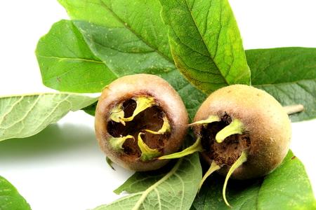 medlar fruits with leaves