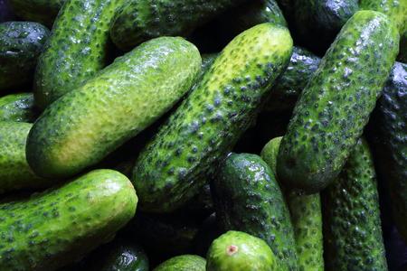 cucumis sativus: fresh pickling cucumbers closeup food background