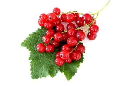 samenstelling van verse rode aalbes vruchten geïsoleerd op een witte achtergrond Stockfoto