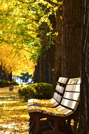 Bench and Ginkgo