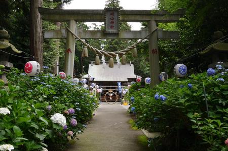 Hydrangea Festival at isoyama shrine, kanuma city, Tochigi Prefecture