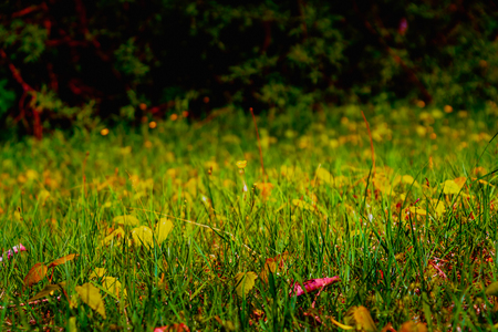 defocussed: Green leaves and wild flower on defocussed nature background Stock Photo