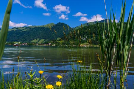 Meadow and defocused Walchsee Lake background, Tirol, Austria