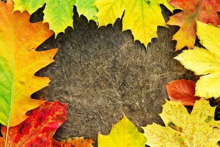 japanese fall foliage: Herbstlaub   japanese fall foliage