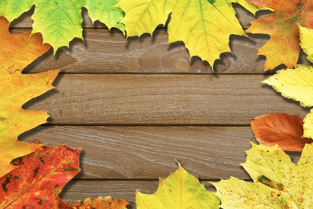fall foliage on a wood background photo