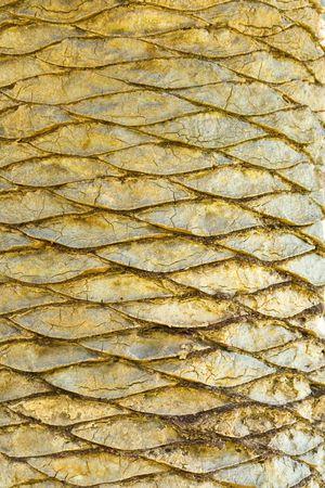 Palm Scales Stock fotó