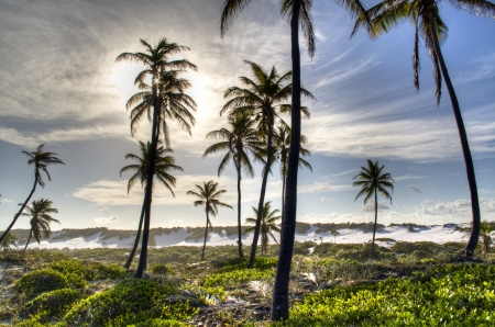 Palm trees between white sand dunes in Brazil Фото со стока - 25032449