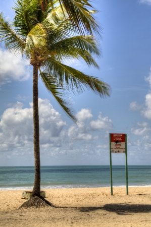 no swimming sign: Warning for the danger of sharks at the coast of Recife, Brazil