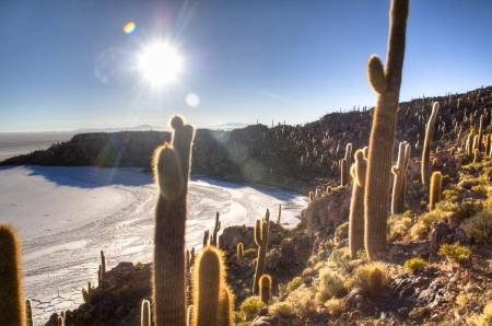 Cactuses the salt flates of Uyuni, Bolivia Фото со стока