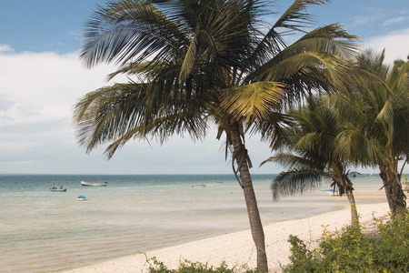 The beach of the small town of Vilanculos in Mozambique with palm trees Фото со стока