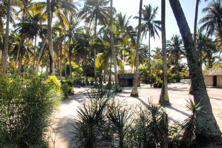 indigence: African village with typical straw huts between palm trees in Praia do Tofo in Inhambane, Mozambique Stock Photo