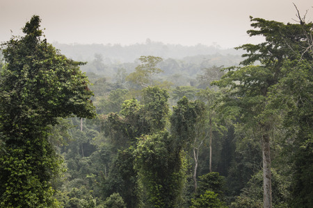 tropical tree: View over the rain forest in Kakum national park, near Cape Coast in Ghana Stock Photo