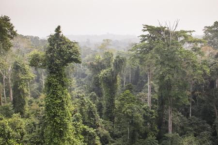 View over the rain forest in Kakum national park, near Cape Coast in Ghana Stock Photo