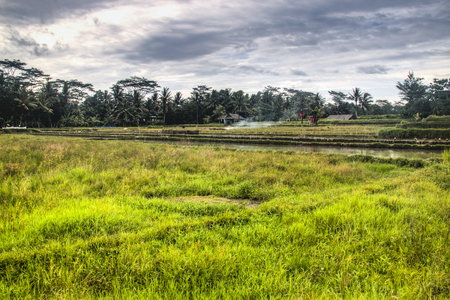 Landscape with many rice fields near the town Ubud on Bali, Indonesia