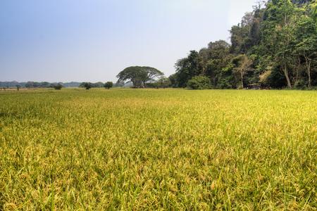 Green landscape with fields near Hpa-An in Myanmar Imagens