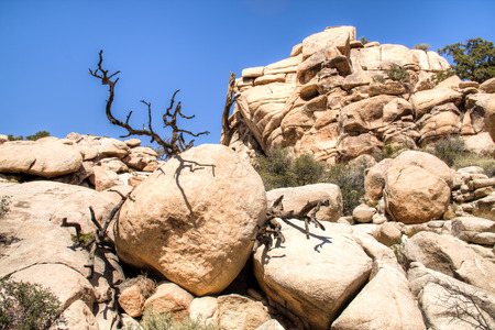 Joshua Tree National Park with its typical trees and rock formations near Palm Springs in the California desert in the USA Banque d'images